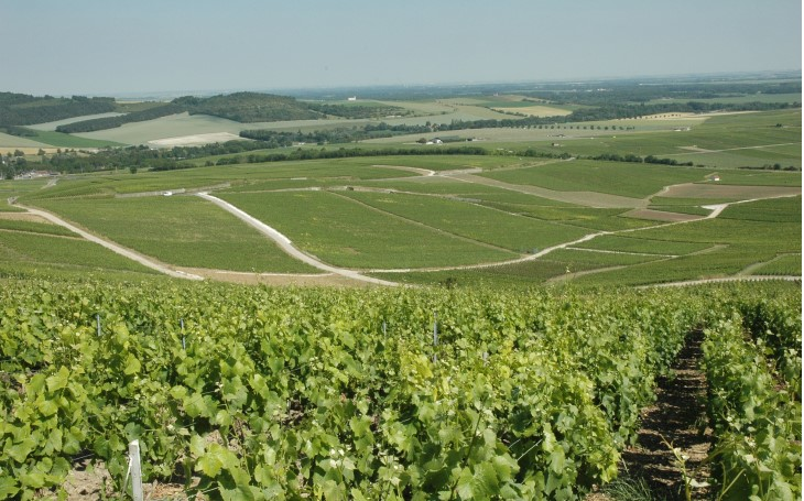 Domaine Champagne Augustin