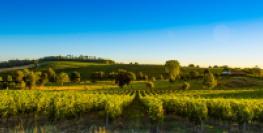 Lapin impérial ou Antilope Tibétaine les nouveaux noms des vins de Bordeaux
