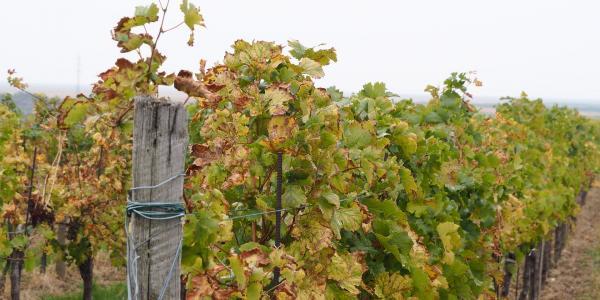 5 bionnes idées pour des vignes responsables