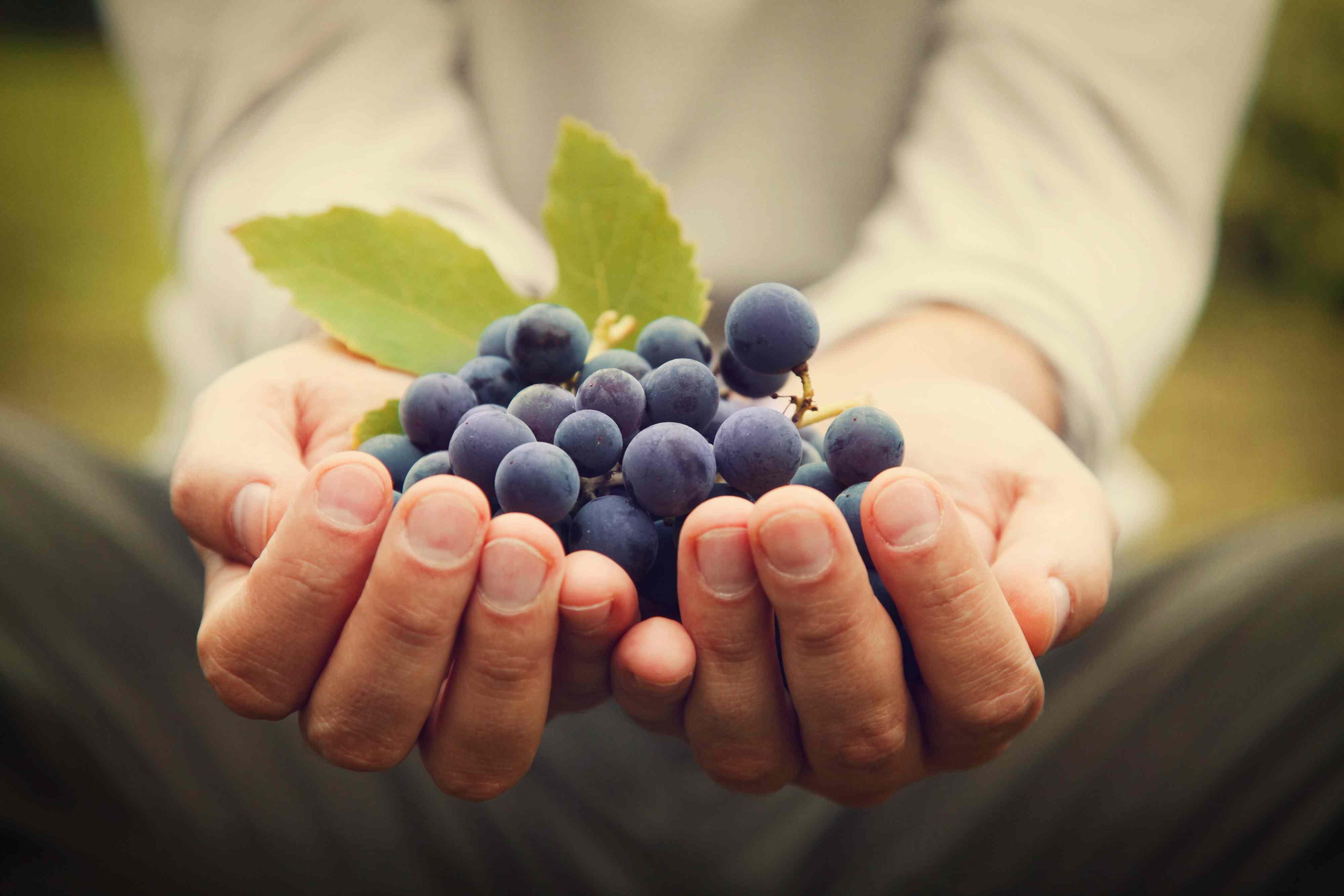 Les différents modes de culture de la vigne et du vin