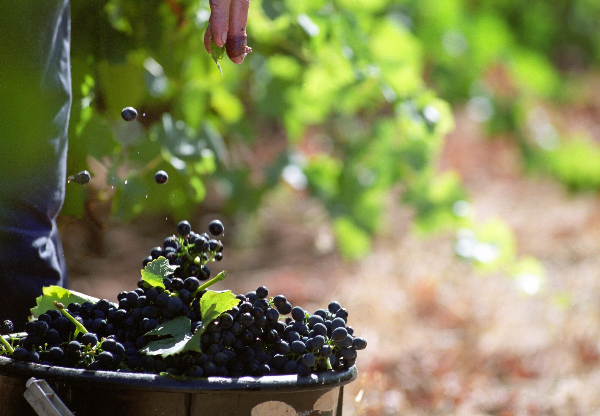 raisin-vin-biodynamie-bio-raisonne